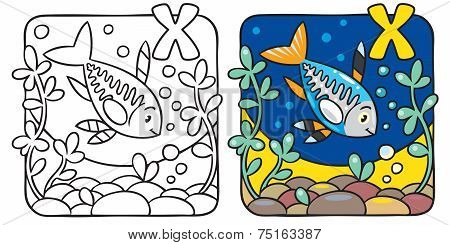 X-ray fish coloring book. Alphabet X
