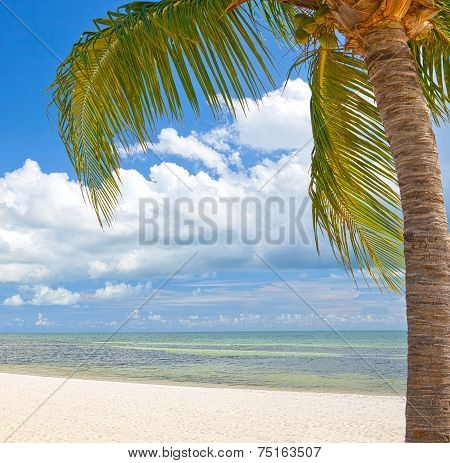 Palm trees on the beach ion Key West Florida
