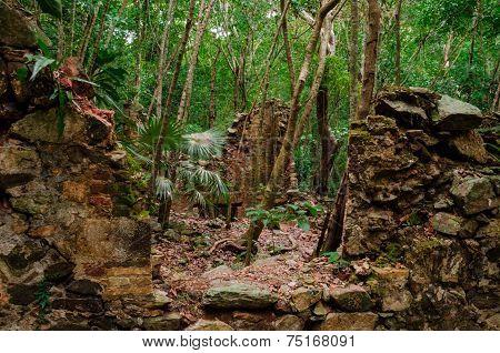 Sugar Plantation Ruins In Jungle