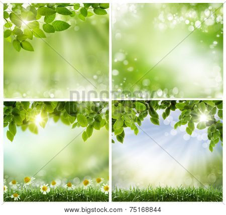 green spring leaves and twigs on light background. Sweep for text, suitable for ecological design, the spring and Easter themes