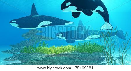 Killer Whale Reef