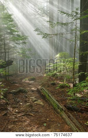 Lynn Peak Trail With Sun Ray