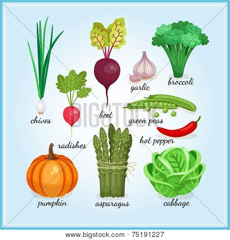 Healthy fresh vegetables icons