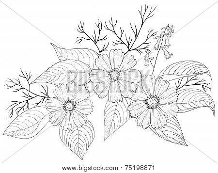Flower cosmos, contours