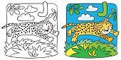 foto of cheetah  - Coloring picture or coloring book of little funny jumping cheetah or jaguar - JPG
