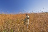 picture of tallgrass  - Nature Lover in the Tall Prairie Grass at Ledges state park in Iowa - JPG