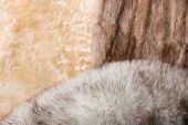 pic of mink  - Blond sheepskin blue fox and red sable mink furs - JPG