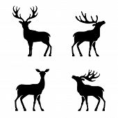 image of antlered  - Vector illustration of collection of deers silhouette - JPG