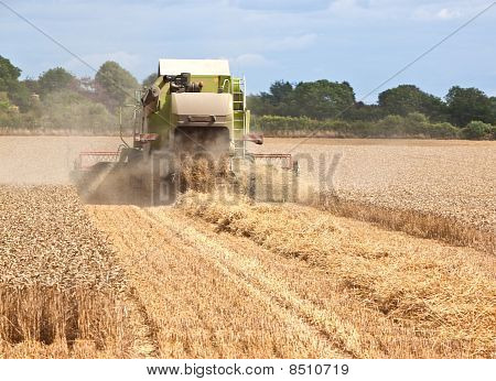 Combine Harvester Working In Field