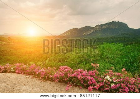 Beautiful sunset in the flower field. Mountains in background. Krabi Province, Thailand.