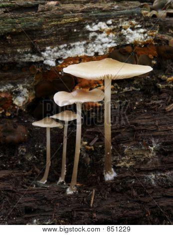 Mushrooms-4