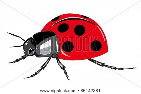 Ladybird isolated on white background.