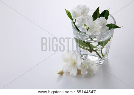 jasmine jasmine flower in a glass with water