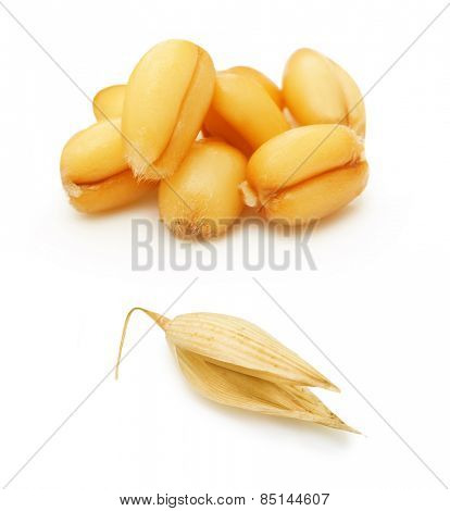 Wheat and oat grain isolated on white background
