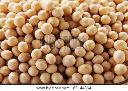 soy bean