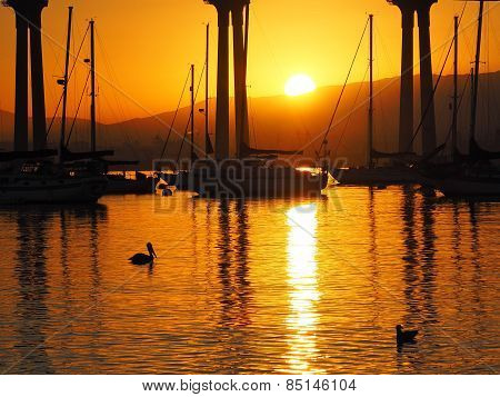 Pelican and Duck at Sunrise, San Diego Bay