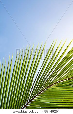 Palm frond lit up by the rising morning sun