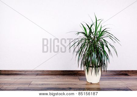 beautiful flowerpot  on wall background