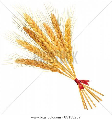 Bunch of wheat on white  background. Vector illustration.