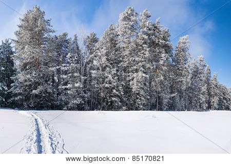 Frosty winter forest under blue sky