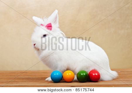 Elegant white rabbit wearing a pink bow sitting on wooden floor with easter eggs