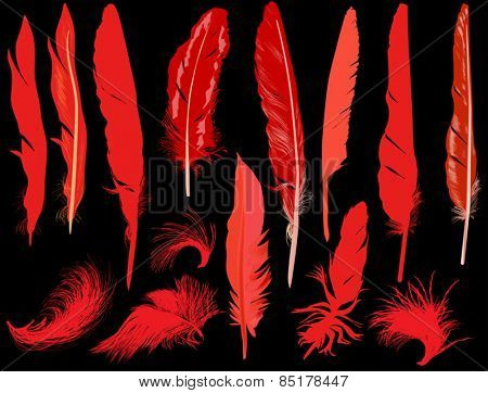 illustration with fourteen red feathers isolated on black background