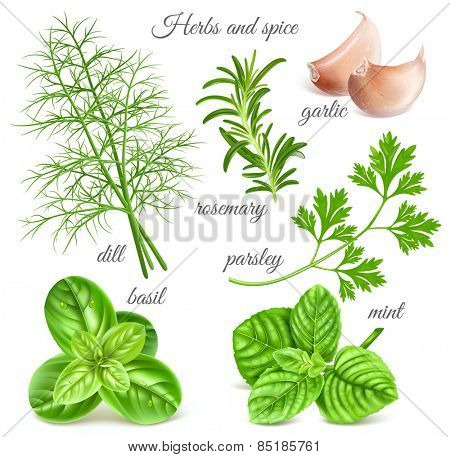 Big herbs and spice collection. Vector illustration