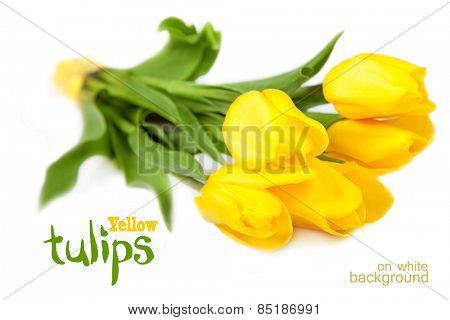 Yellow tulips on a white background
