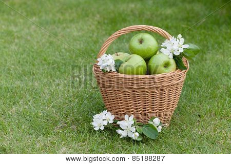 Ripe green apples with flowers in basket on green grass