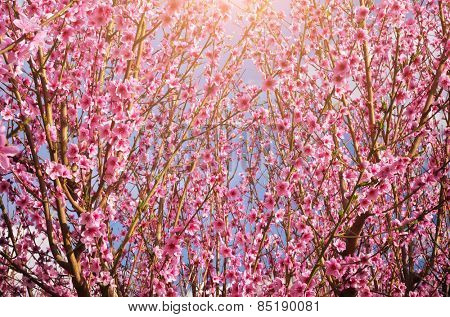 Spring flower texture. Element of design.