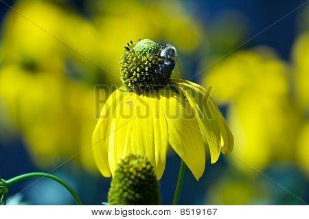 花 & 蜂的