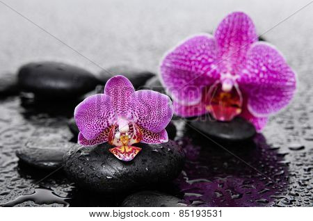 Still life with two pink orchid with therapy stones