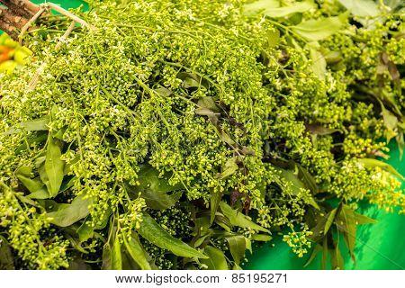 Organic Vegetables, Onion, Lettuce, Green, Fresh, Clean And Organic.