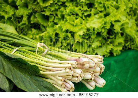 Organic Vegetables,  Lettuce, Green, Fresh, Clean And Organic.