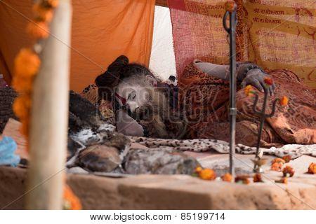 Sadhu Sleep