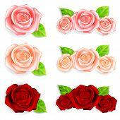 image of rose bud  - Set of red - JPG