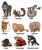 foto of wombat  - Different type of rare animals - JPG