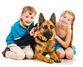 pic of pre-adolescent child  - happy children with a shepherd dog isolated  on white - JPG