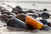 pic of precious stone  - Amber stone on rocky beach - JPG