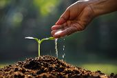 pic of planting trees  - Farmer - JPG