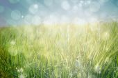 stock photo of shimmer  - Light design shimmering on green against green meadow - JPG