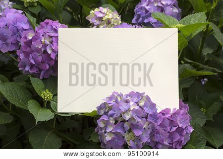 Paper Note In Hydrangea Flowers