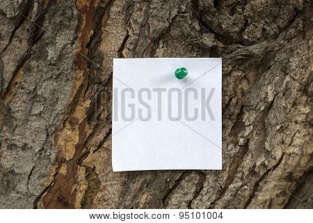 Paper Notice At The Bark Of Tree