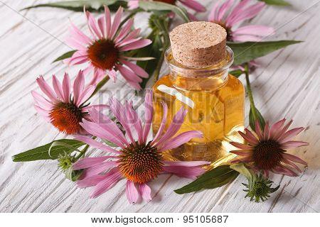 Fragrant Medical Tincture Of Echinacea Purpurea Closeup