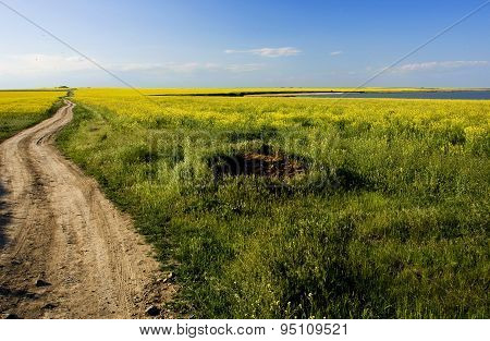 Rapeseed Cultivation