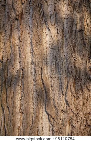 Closeup photo of a tree trunk