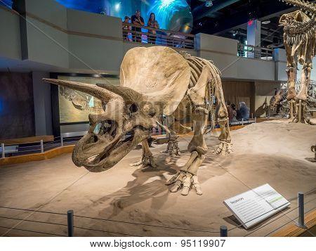 Dinosaur fossil exhibit