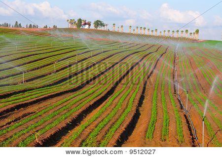Watering Plantlet