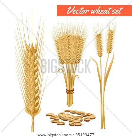 Wheat plant heads and grain poster