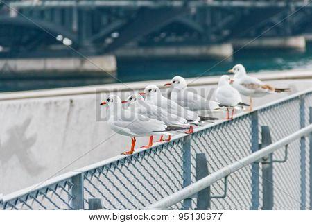 Company Of Gulls